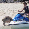 Photo of the Day: Andrei Kirilenko Feeding a Pig from a Jetski?